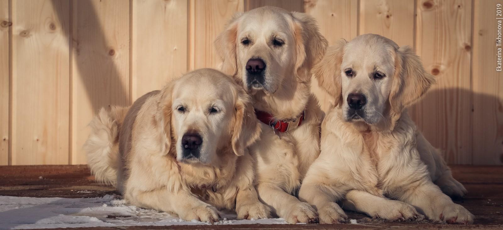 """Гостиница для собак """"Как дома"""" в Спб"""